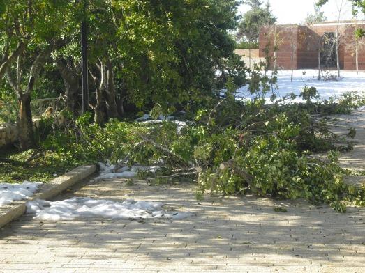 alberi caduti 2