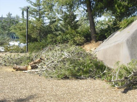 alberi caduti 3