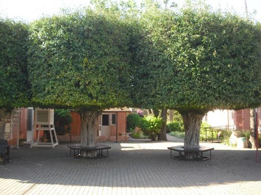 cortile Aaronsohn