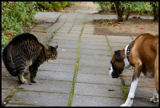 Cat-dog-face-off