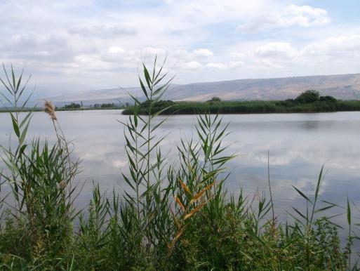 lago 4