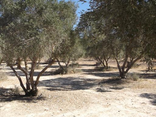 ap-alberi