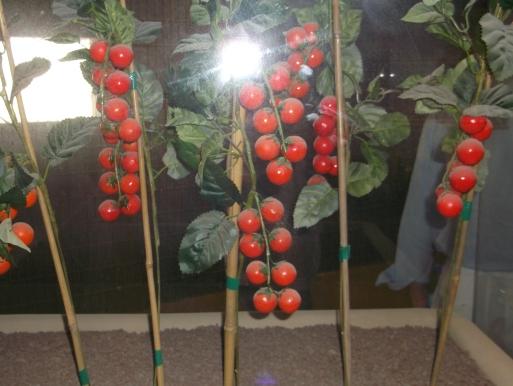 coltivazioni-2