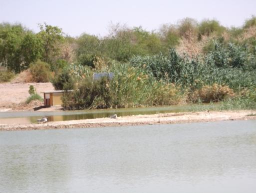 lago 2