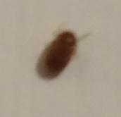 insetto 3